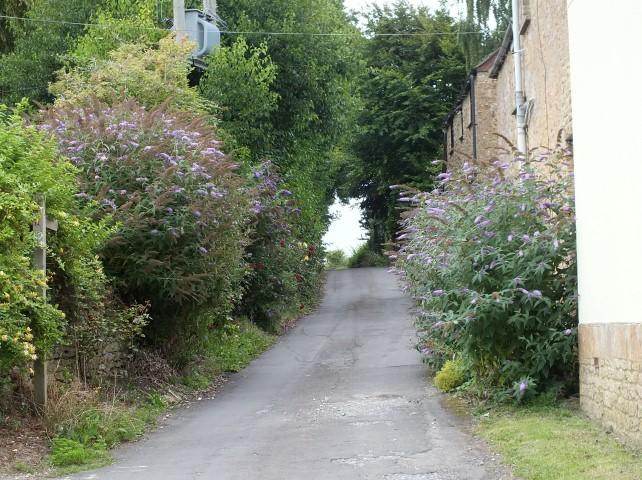 Trindlewell Lane
